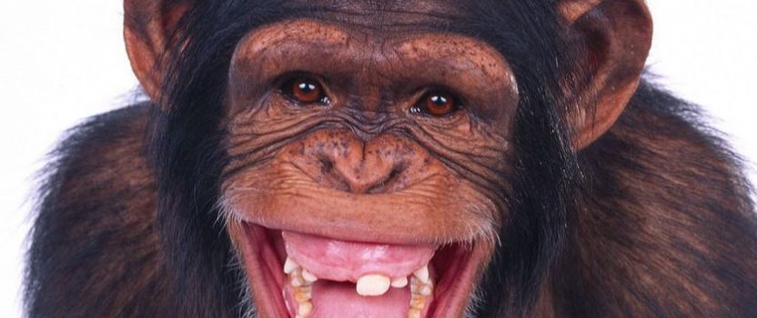 Margarine Mascot Monkey Gives Birth in Pipe Organ