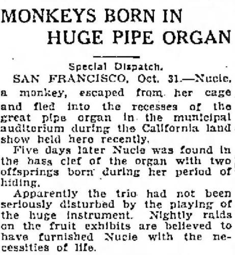 Monkeys Born in Pipe Organ